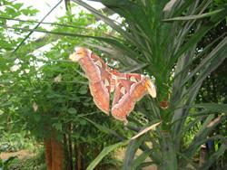 Schmetterlingspark Uslar